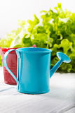 Garden watering can and bucket on white boards against greens Royalty Free Stock Photos