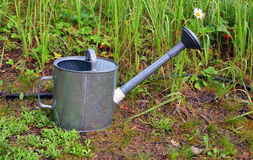 Garden watering can Royalty Free Stock Photos