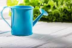 Garden watering can on white boards against greens Royalty Free Stock Photos