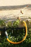 Garden watering hose Royalty Free Stock Image