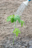 Garden is watering planters in his farm Stock Images
