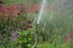 Garden watering Royalty Free Stock Photography