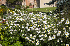 Garden of Wawel Castle in Krakow by the River Vistula, the Royal Wawel Castle is a mecca for Tourists visiting this  wo Royalty Free Stock Image