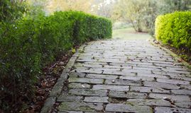 Garden way. Shallow depth of field royalty free stock photography