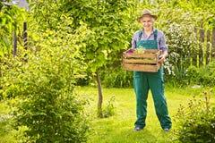 Garden wearing straw hat gardener box plants Royalty Free Stock Image