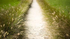 Garden Wedding Aisle. A wedding or bridal path in a garden setting. Both sides of the aisle are lined with fountain grass royalty free stock photography