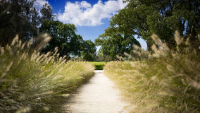 Garden Wedding Aisle. A wedding or bridal path in a garden setting. Both sides of the aisle are lined with fountain grass. The setting is surrounded by green stock images