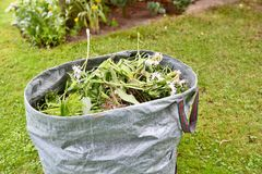 Garden weed bag Stock Images