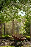 Garden wheelbarrow on the yard under the blooming pear tree. Vertical photo Royalty Free Stock Images