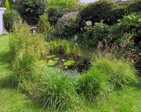 Garden Wildlife Pond Stock Photography