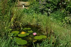 Garden Wildlife Pond Royalty Free Stock Photography