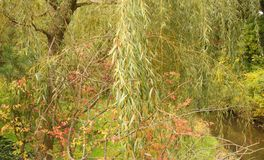 A garden with a Willow tree and a stream Royalty Free Stock Photography