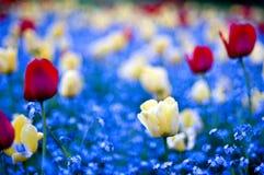 Free Garden Win Flowers Stock Photography - 4930322