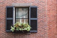 Garden On Window. A Flower pot on window Royalty Free Stock Photography