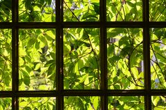 Carved grape leaves  from the back of the window. Garden window in my country house royalty free stock photos