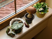 Garden on window sill royalty free stock photography