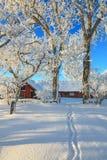 Garden winter path Stock Photo