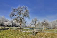 Beautiful old orchard in winter time Stock Images