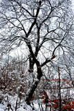 Garden in winter.  Typical urban landscape of the city Brasov, Transylvania Brasov is a town situated in Transylvania, Romania, in Stock Images