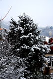 Garden in winter.  Typical urban landscape of the city Brasov, Transylvania Brasov is a town situated in Transylvania, Romania, in Stock Photos