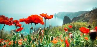 Free Garden With Poppy Flowers Royalty Free Stock Photos - 31222078