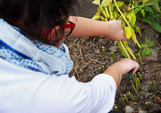 Garden Woman is Making Autumn Garden Work royalty free stock photo