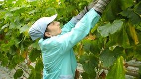 garden woman working απόθεμα βίντεο
