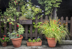 Garden with a wooden fence and flower pots Stock Image