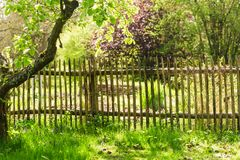 Garden with wooden fence. Garden with old fruit trees and wooden fence royalty free stock photo