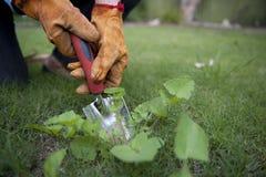 Garden Work Stock Photos