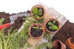 Garden work royalty free stock photography