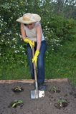 Garden work. Woman digging by a shovel royalty free stock photos