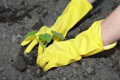 Garden work Royalty Free Stock Image