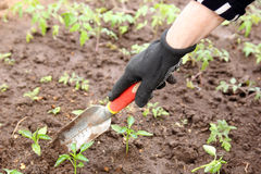 Garden work Stock Photo