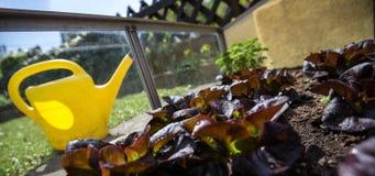 Garden work in a little greenhouse. Some garden work in a little greenhouse Stock Images