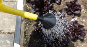 Garden work pour water Royalty Free Stock Photography