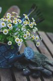 garden work still life in summer. Camomile flowers, gloves and tools on wooden table outdoor stock photos