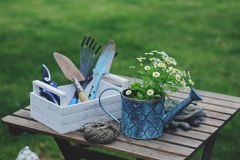 Garden work still life in summer. Chamomile flowers, gloves and tools on wooden table outdoor. In sunny day with flowers blooming on background royalty free stock images