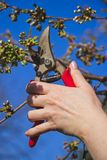 Garden work on a trees in springtime royalty free stock photography