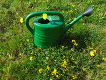 Garden work / watering can in grass. Watering can in grass with yellow flowers Royalty Free Stock Images