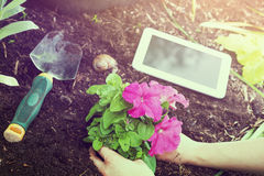 Garden Work With White Business Tablet, Flowers And Gardening Tools At Sunrise. Some Garden Work With White Business Tablet, Flowers And Gardening Tools At Royalty Free Stock Images