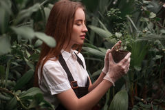 Garden worker look at seedling growth Stock Photo