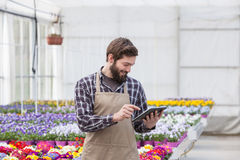 Garden worker with tablet. Young adult male garden worker in apron using digital tablet at greenhouse Stock Photos