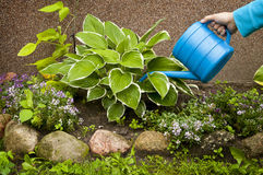 Garden works - watering plants Royalty Free Stock Photos