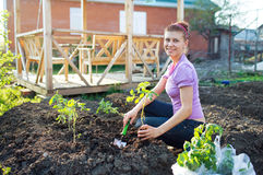 Garden Works. Young Woman Working in the Garden Stock Image