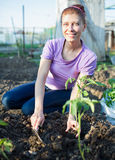 Garden Works. Young Woman Working in the Garden Royalty Free Stock Photo