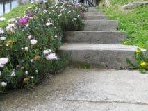 Garden& x27; s-betongtrappa Arkivfoto