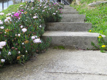Garden's concrete stairs Stock Photo
