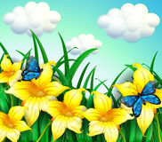 A garden with yellow flowers and blue butterflies Stock Photography