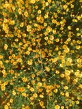 Garden with yellow flowers stock image